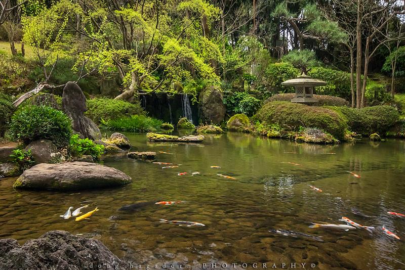Coy Pond (#0578)