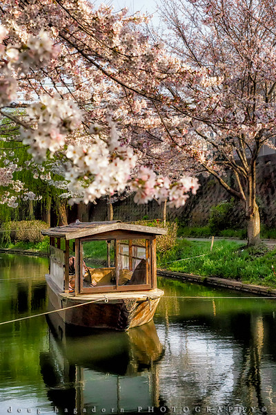 Under The Blossoms (#0589)