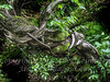 Twisted Branch - Copyright 2017 Steve Leimberg - UnSeenImages Com _DSF2718