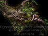 Twisted Branch - Copyright 2017 Steve Leimberg - UnSeenImages Com _DSF2722