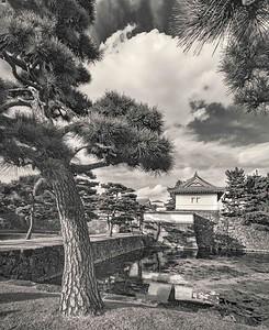 Palace Pines at Midday.