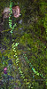 Tree Detail - Copyright 2017 Steve Leimberg  UnSeenImages Com _DSF2729