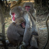 Monkey Hugging