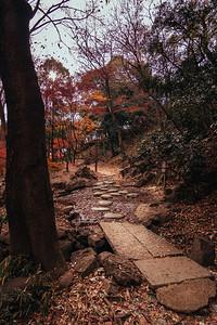 Path Through Momiji Park in Tokyo Japan