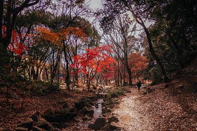 Man Walking Through Momiji Park in Tokyo Japan