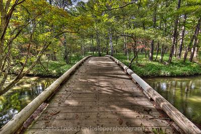 Walking through the Marshlands in Nikko, Japan