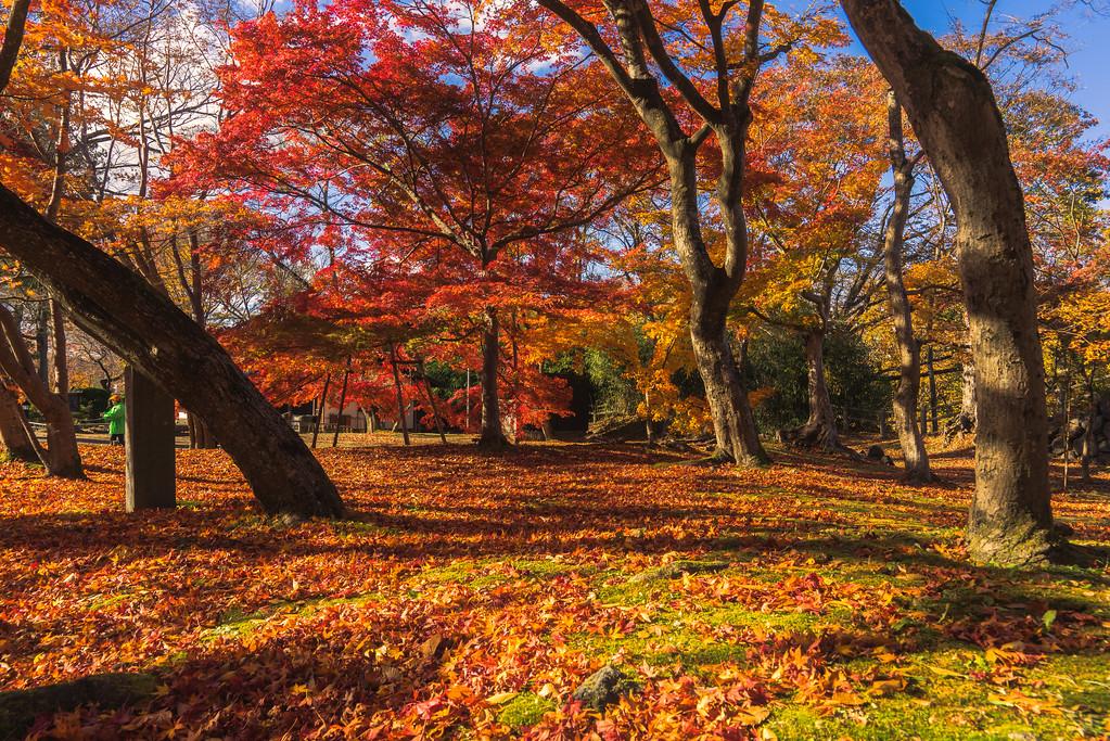 Komoro Autumn