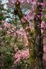 Blossoming Garden (#0299)
