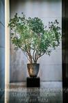 Tree at Conrad Hilton - Tokyo - Copyright 2017 Steve Leimberg - UnSeenImages Com _DSC1863