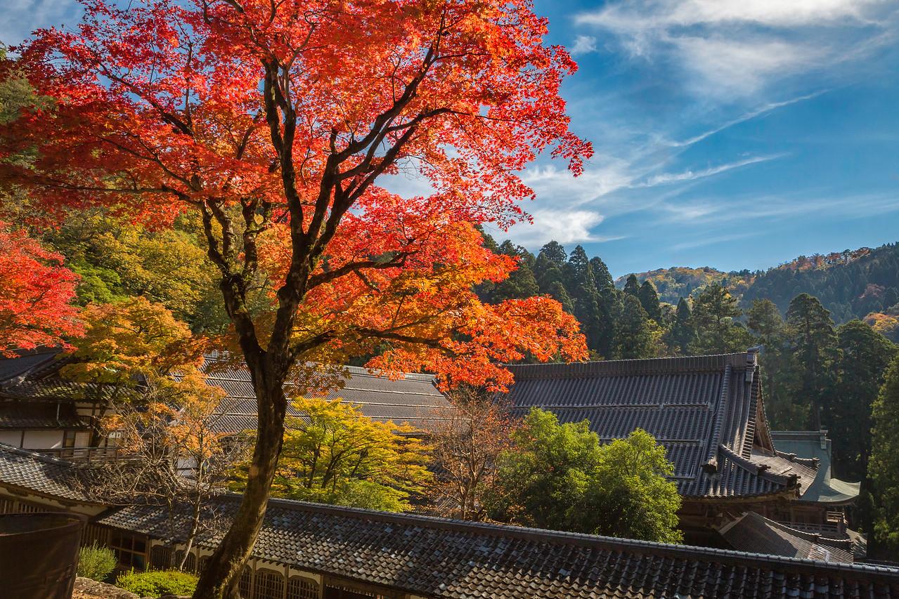 Autumn Sky of Fukui.
