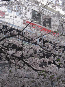 """From Nakameguro to Everywhere.""  A Tokyo Metro train passes behind cherry blossoms on the Meguro River."