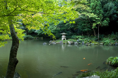 Japanese garden with Koi pond, maple trees and lantern. Narita-San near Tokyo, Japan.
