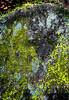 The Rock - Copyright 2017 Steve Leimberg - UnSeenImages Com _DSF2789