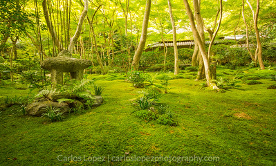 Moss Temple in Kyoto, Japan.