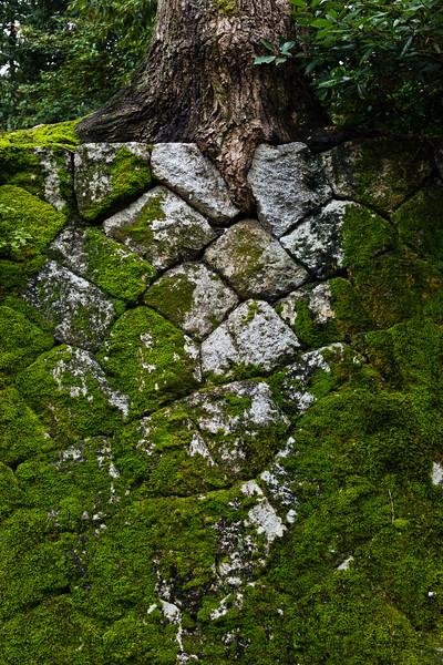 Root, Rock, Moss
