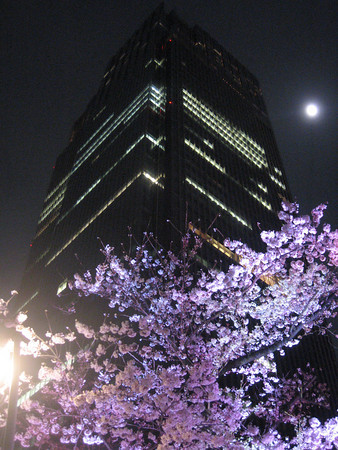 Sakura starting at night.
