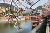 Japanese Spring (#0599)
