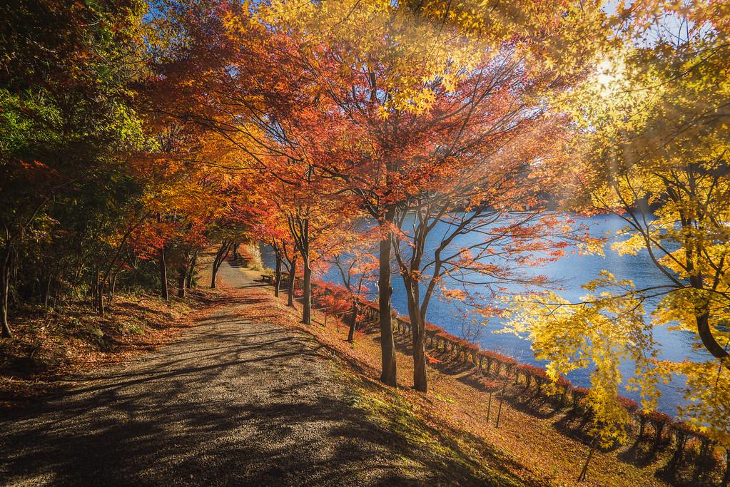 Usui Lake Autumn