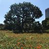 Hamariku Gardens