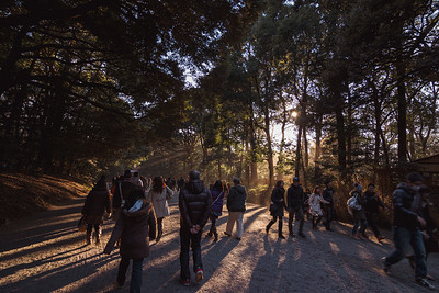 Sunlight Beaming On People Walking into Meiji Shrine in Tokyo Japan