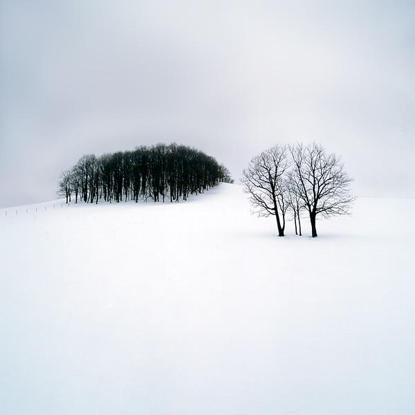Ubetsu-cho Forest and Tree Study IV