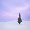 Lone Tree, Late Afternoon