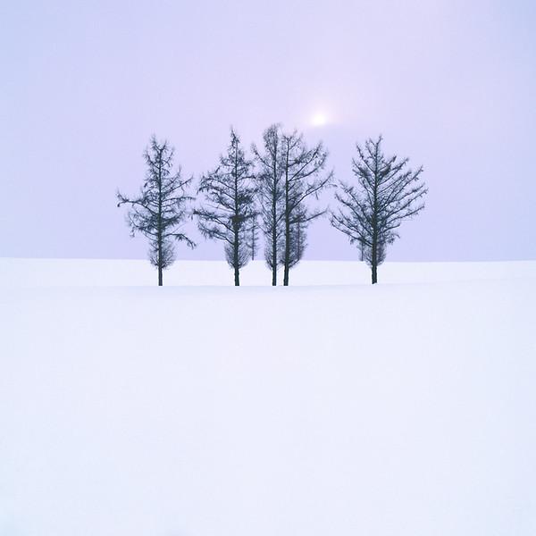 Bei-cho Tree Study  III