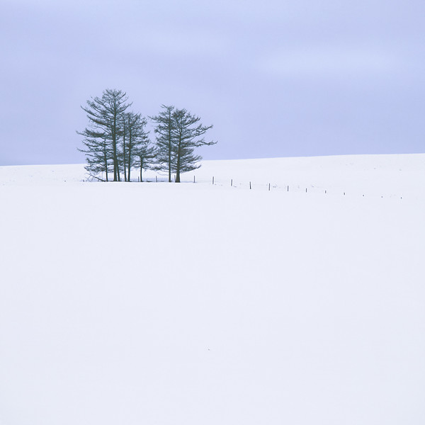 Eight Trees  II