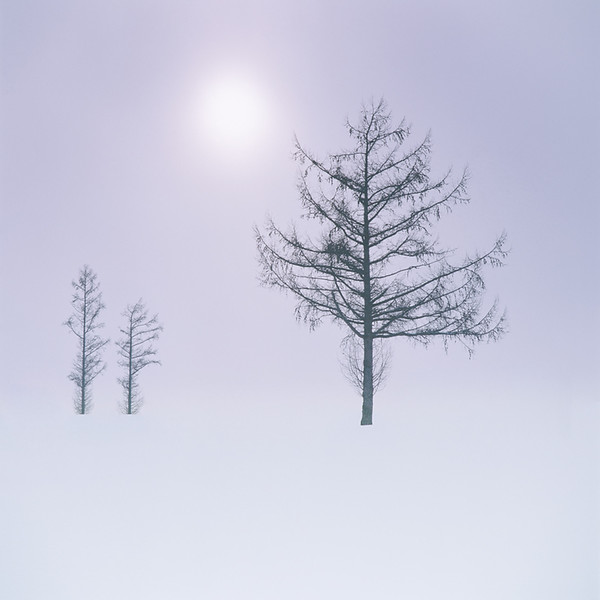 Bei-cho Tree Study  II