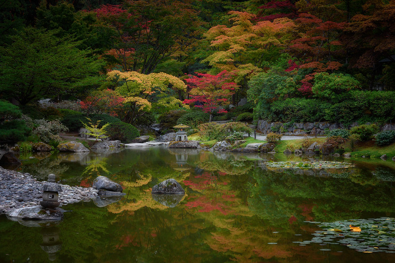 The Seattle Japanese Garden after dark during the height of the fall color season.