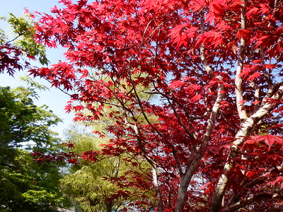 Acer Colorful Canopy