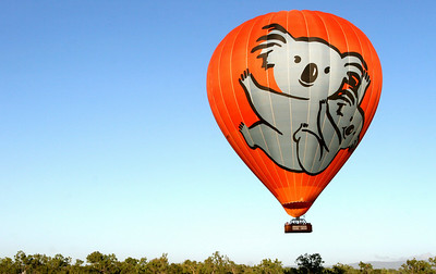 Famous Koala Hot Air Balloon