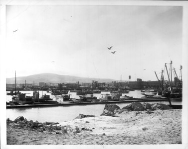 """Fish Harbor in Terminal Island, operating base for the Japanese fishing fleet.  In the background are some of the canneries.""--caption on photograph"