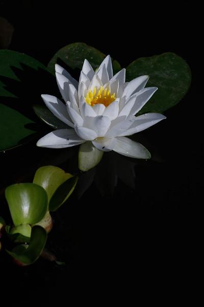Jardin Botanique-8198
