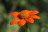 Jardin Botanique-3665