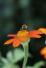 Jardin Botanique-3687