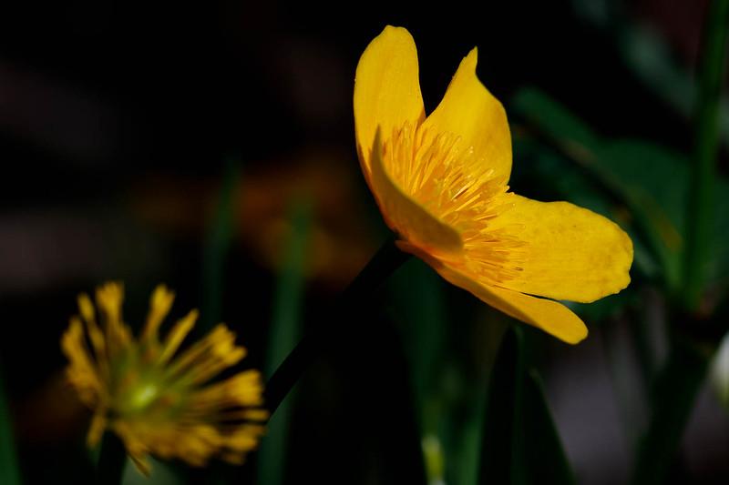 Jardin botanique-3871