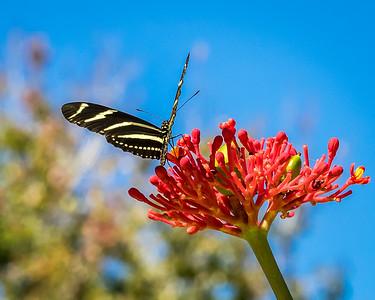 Mounts Botanical Garden - Floride