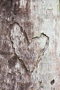 Rakkautta palmun pinnassa