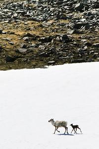 Lukan Gamvikin retkeltä 2012