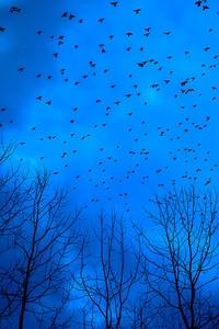 Lintuja kotikulmilta