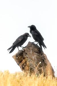 Lukan Extremaduran retkeltä 2013