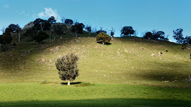 Harden Hillside