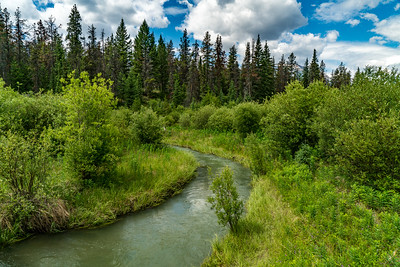Stream in the Jasper Meadows