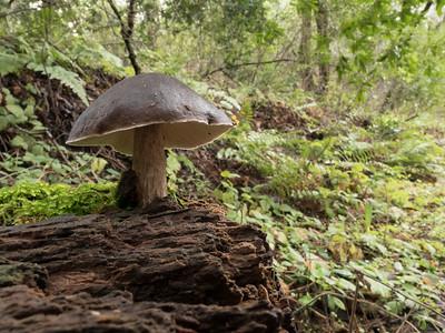 Mushroom of some sort on a dead log.