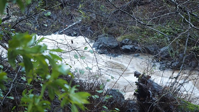 Video clip of creek between dam and bridge over Fire Road C