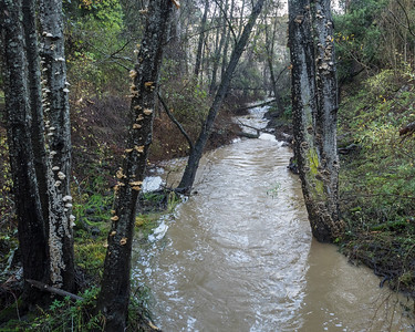 Looking upstream from bridge on Fire Road C