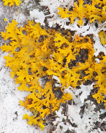 Lichens at JRBP 8Mar2012