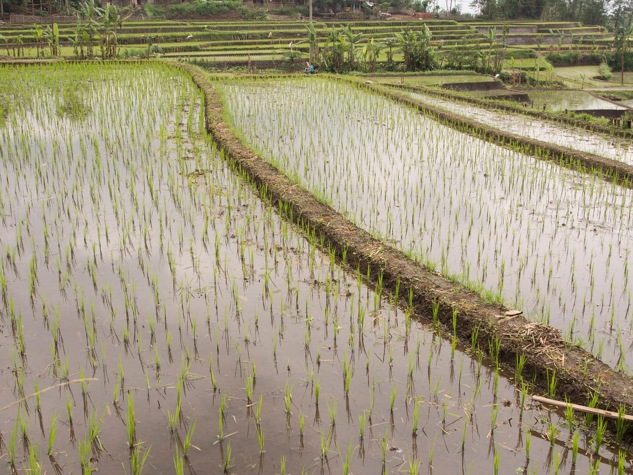 Candi Sumberawan, Java, Indonesia