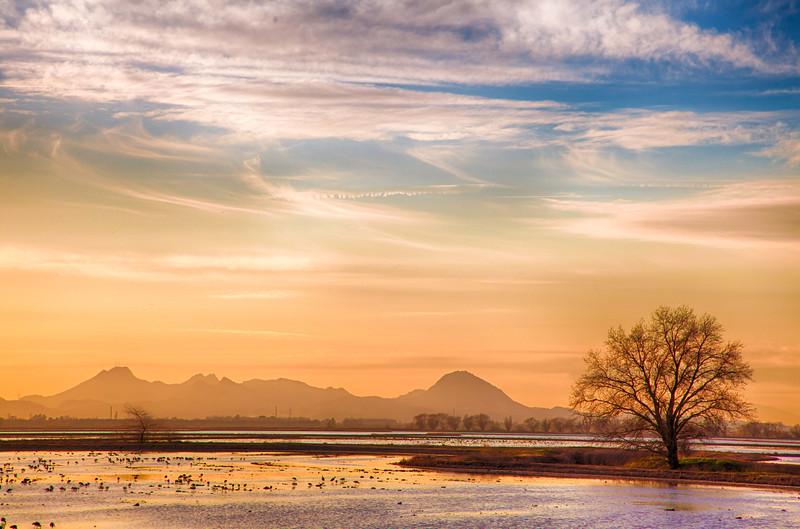 Sunset over rice paddies - Sacramento Valley